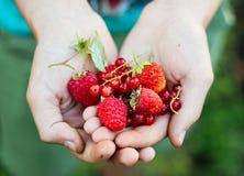 可口红色莓果 库存图片