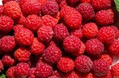 可口红色莓果 免版税库存照片