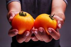 可口自创蕃茄在人` s手上 免版税图库摄影