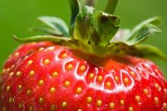 可口草莓 免版税库存图片