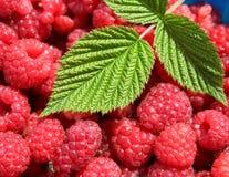 可口莓 免版税库存图片