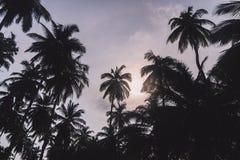 可可椰子分支在蓝天下 库存图片