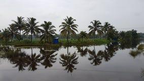 可可椰子反射 库存图片