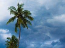 可可椰子在多云天空背景的树剪影 在风的绿色叶子 库存图片