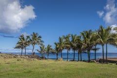 可可椰子在安加罗阿海岸排队了  免版税图库摄影