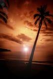 可可椰子在日落的回归线 库存照片