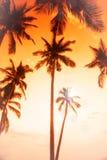 可可椰子在日落的回归线 库存图片