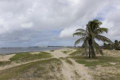 可可椰子树和海滩沙丘 库存照片