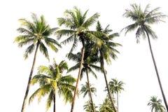 可可椰子树在被隔绝的热带海岛 免版税库存图片