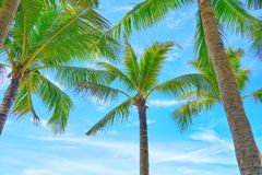 可可椰子树型视图和蓝天在海滩 免版税库存照片