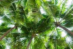 可可椰子树底视图,透视图 免版税库存图片