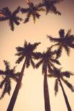 可可椰子树日落减速火箭剪影的葡萄酒 库存照片