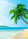 可可椰子树 皇族释放例证