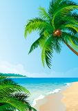 可可椰子树 库存例证