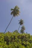 可可椰子树- Coqueirinho海滩,康德铅,巴西 免版税库存照片