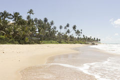可可椰子树- Coqueirinho海滩,康德铅,巴西 库存照片