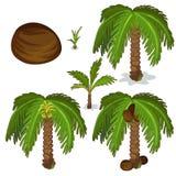 可可椰子的种植和耕种 向量 向量例证