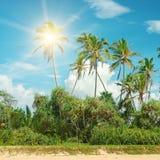 可可椰子 免版税库存照片