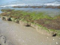 可可粉海滩珊瑚礁 免版税库存照片