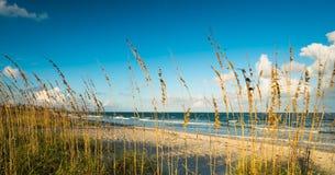 可可粉海滩 库存照片