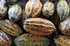 可可粉,成熟果子 免版税图库摄影