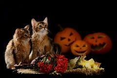可怕万圣夜南瓜和两只索马里小猫 免版税库存照片