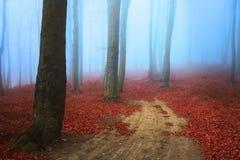 可怕有薄雾的路在森林里 免版税图库摄影