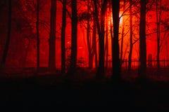 可怕有雾的森林 免版税库存图片