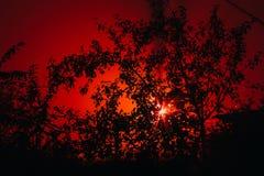 可怕有雾的森林 免版税库存照片