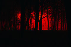 可怕有雾的森林 库存照片
