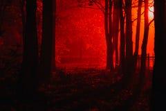 可怕有雾的森林 库存图片
