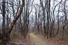 可怕森林 库存照片