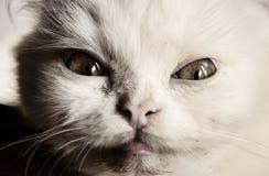 可怕猫 库存照片