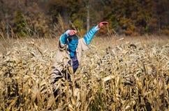 可怕玉米迷宫和外籍人 免版税库存照片