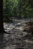 可怕的地方在一个黑暗的森林里 免版税库存图片