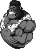 可怕的大猩猩运动员 免版税库存照片