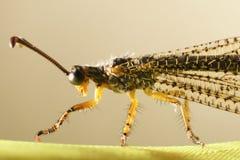 可怕的昆虫 免版税库存图片