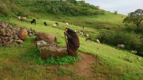 可怕的牧羊人 免版税库存照片