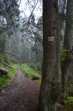 可怕的足迹在森林 免版税库存照片