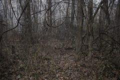可怕背景蠕动的黑暗的森林的夜间 库存照片