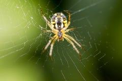 可怕蜘蛛本质上 宏指令 免版税图库摄影