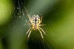 可怕蜘蛛本质上 宏指令 库存照片