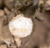 可怕蜘蛛本质上 宏指令 图库摄影