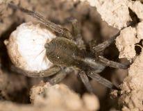 可怕蜘蛛本质上 宏指令 库存图片