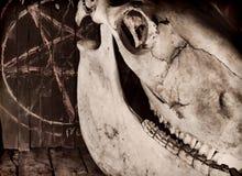 可怕马头骨和罪恶五角星形 库存照片