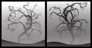 可怕结构树 图库摄影