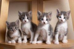 可怜小猫坐 免版税图库摄影