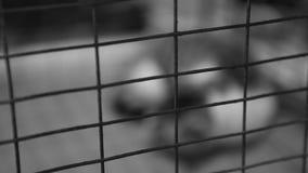 可怜的无家可归的猫睡觉在钢棍后的,宠物风雨棚,放弃了动物 股票录像