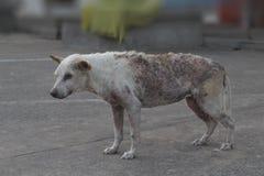 可怜的污秽的狗 免版税库存图片