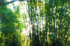 可持续发展的重新造林 免版税库存图片